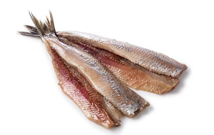 haring vette vis