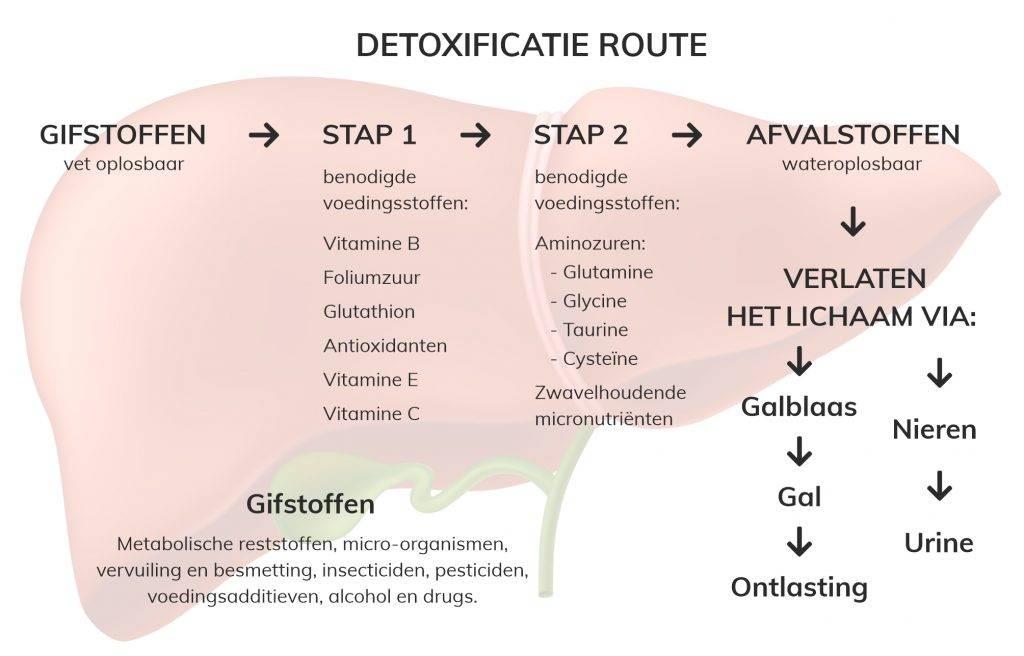 Dit is de detox route van je lever. Als die niet goed werkt ontstaan leverproblemen en kan je lever voedingsmiddelen niet reinigen.