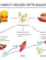 zo veroorzaakt vet eten insuline resistentie